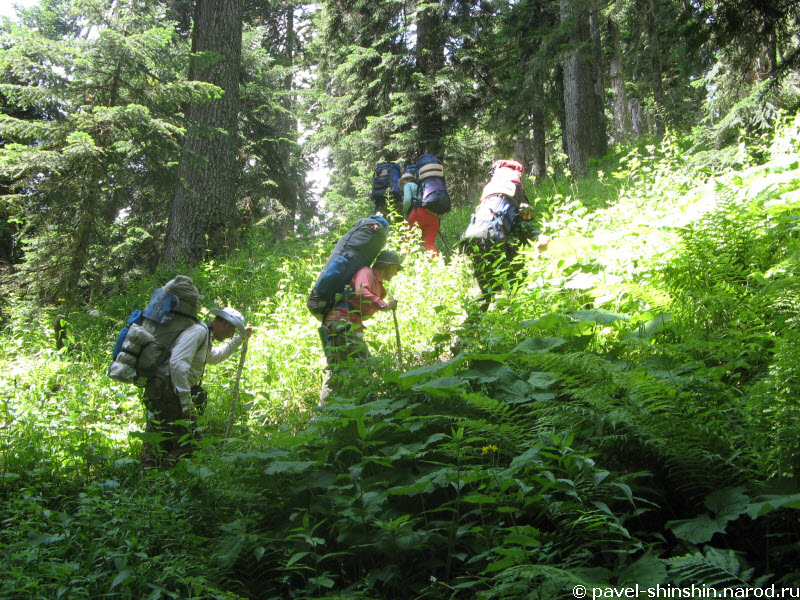 Подъём по лесу