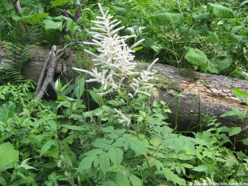 Непонятное растение