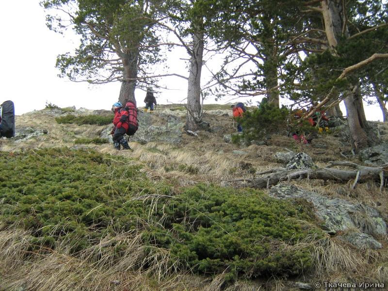 Группа входи в лес