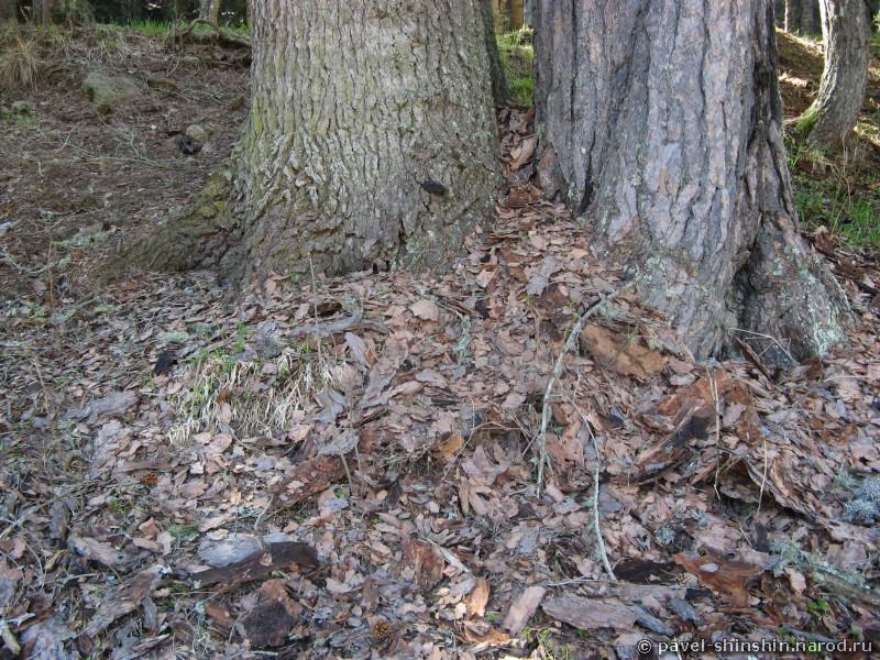 Лесной пазл